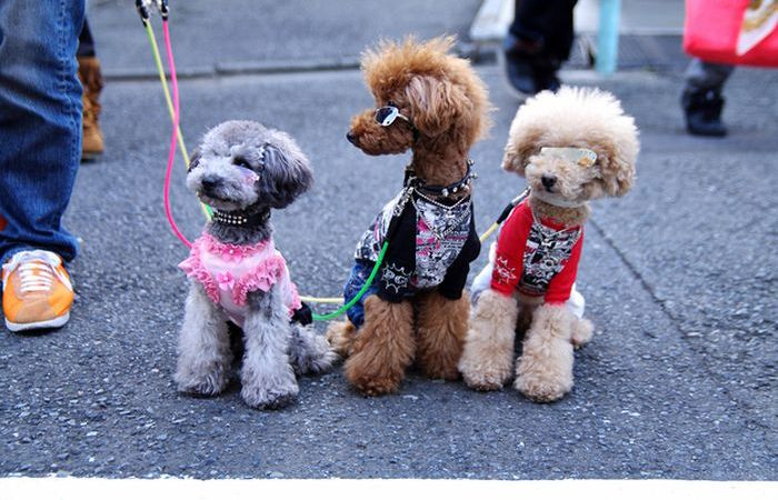 japanese street style dog fashion