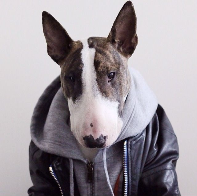 neville jacobs fashion icon instagram dog