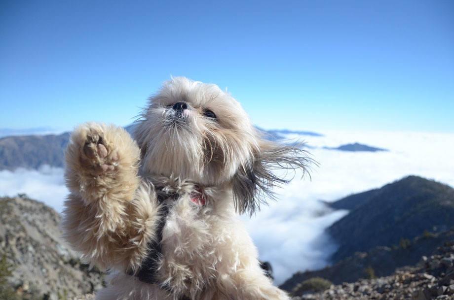 Dog traveler selfie