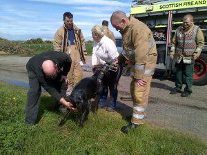 Photo via Scottish SPCA