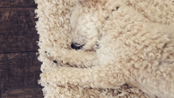 The 8 Best Moments of Dog Camouflage