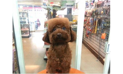 4 Insane Dog Grooming Trends Rover Blog