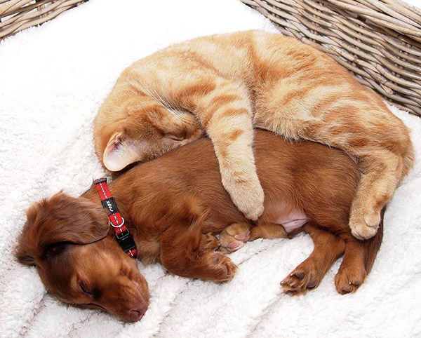 how to teach a dog to cuddle