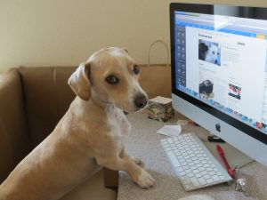The internet has revolutionized the way we socialize, and it's no different for our pets with pet-networking sites becoming mainstream.