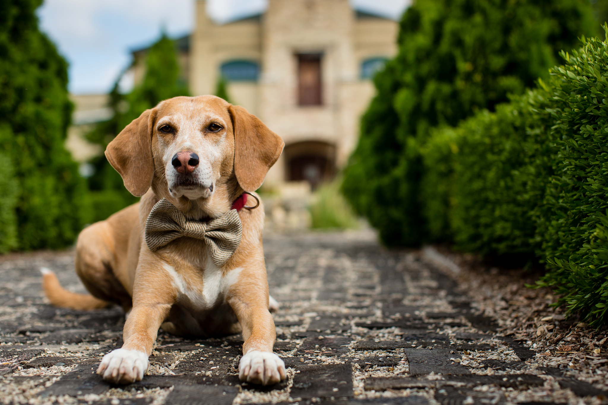 What Reactive Dog Owners Want You To Know | Rover.com