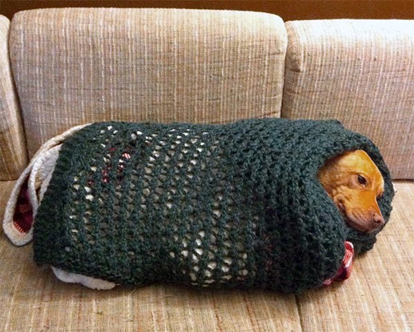 crocheted dog burrito