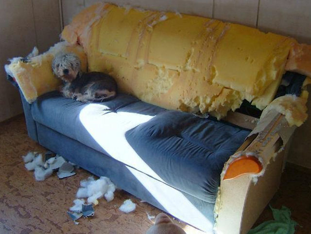 dog couch ruined