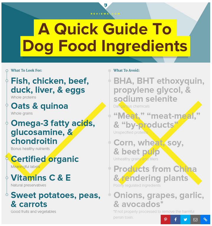 Organic Raw Dog Food Best