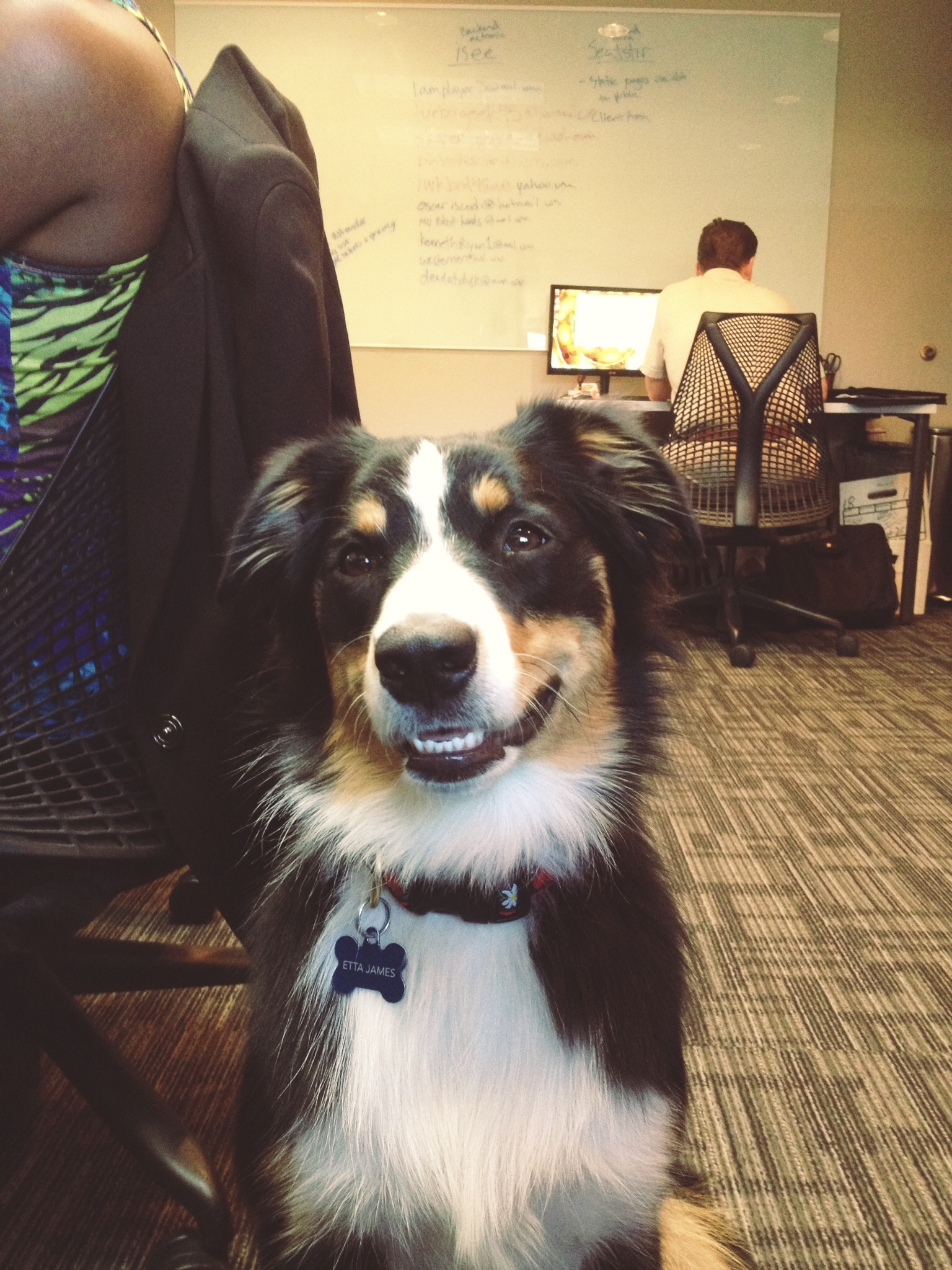 11 Top Dog Friendly Offices Around The Country The Dog