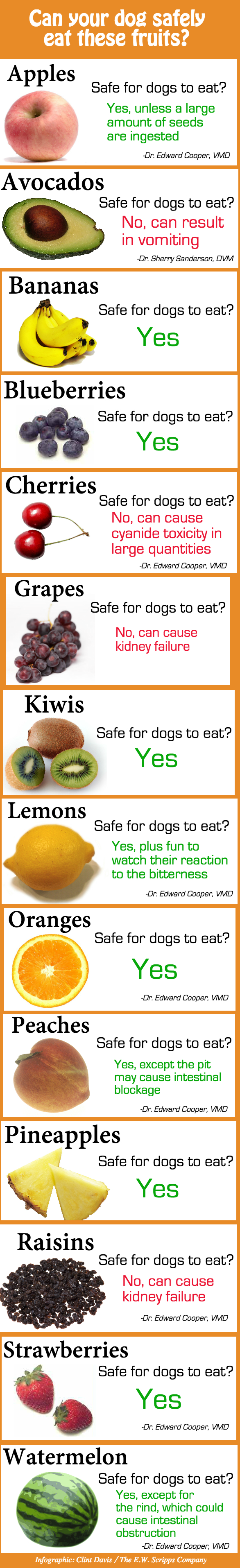 Whatare Foods Kill Dogs