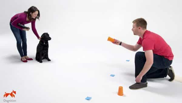 Review: We Tried the Dognition Intelligence Test to Find Out if it Really Works.