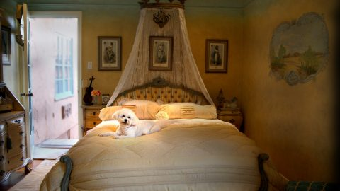 Fancy dog bed - dog vacation homes
