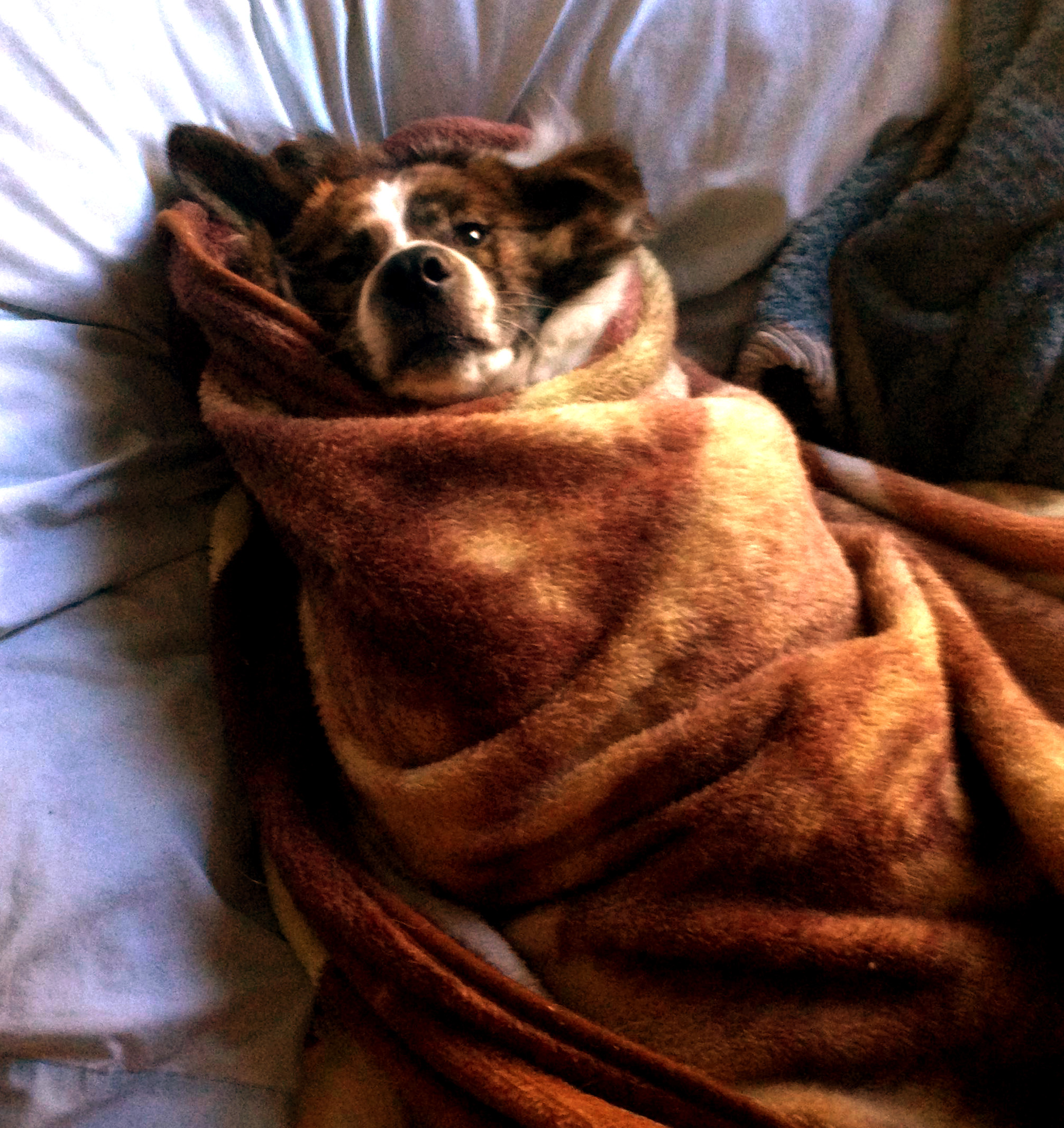 happy dog burrito2