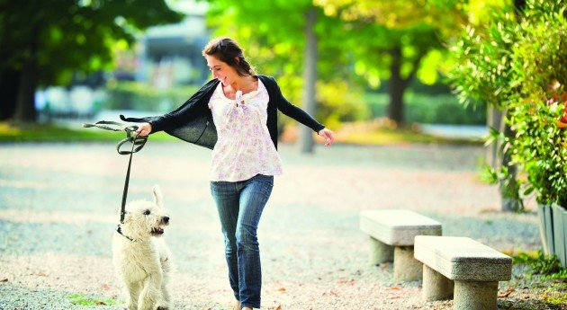 Big News for Rover Sitters: You Can Now Offer Dog Walking, Drop-In Visits, and Doggy Day Care
