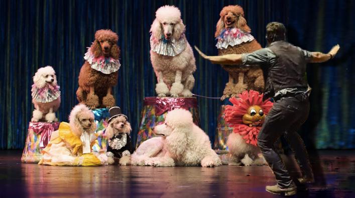 jurassic poodle squad