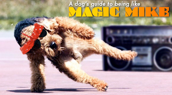 9 Dogs Working Their Magic Mike Moves