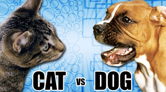 quiz cats versus dogs