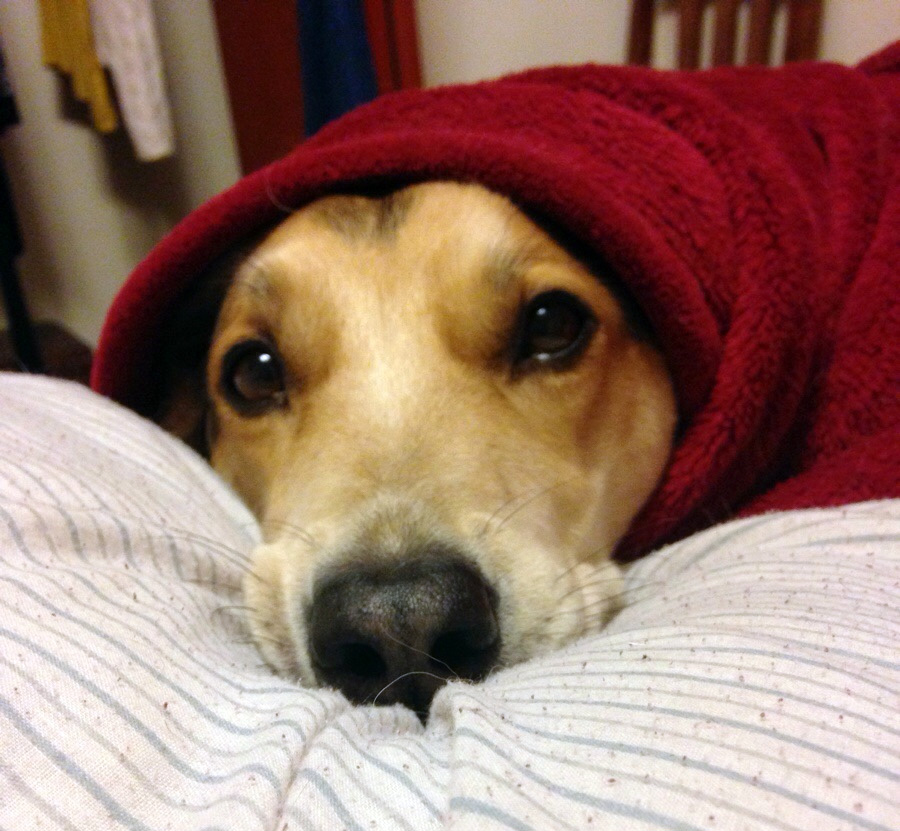 red burrito dog