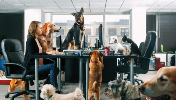 11 Top Dog-Friendly Offices Around the Country