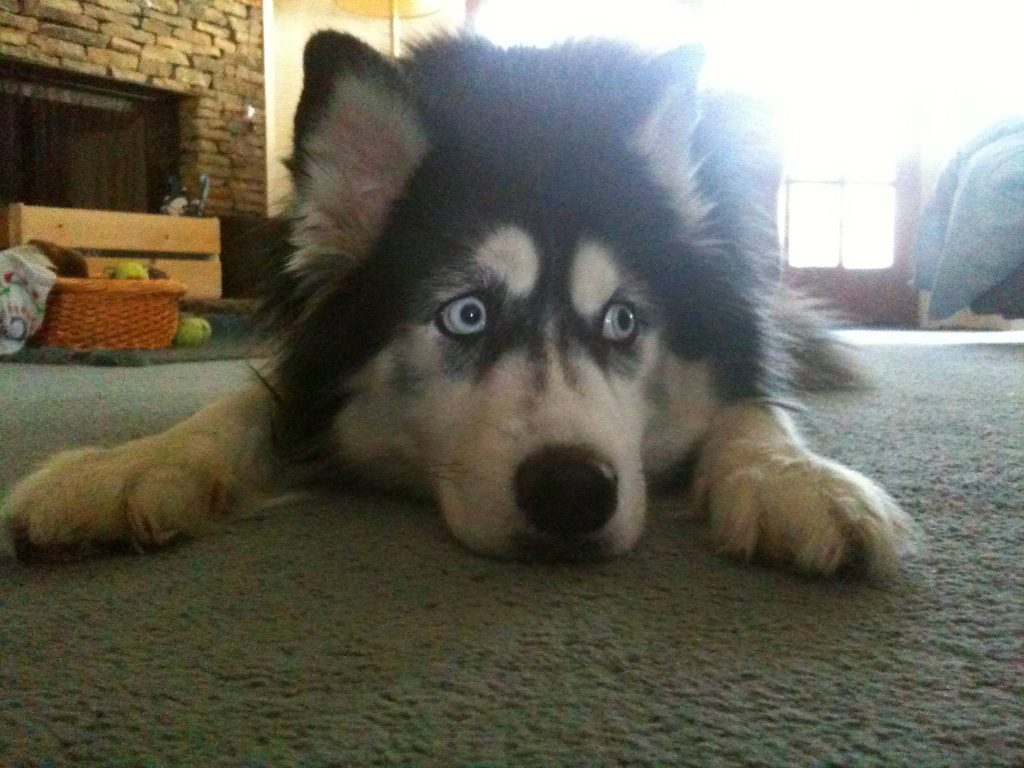 9 Dogs Who Are Complet...
