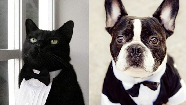 Who Wore It Better—Cat Versus Dog Edition [Quiz]