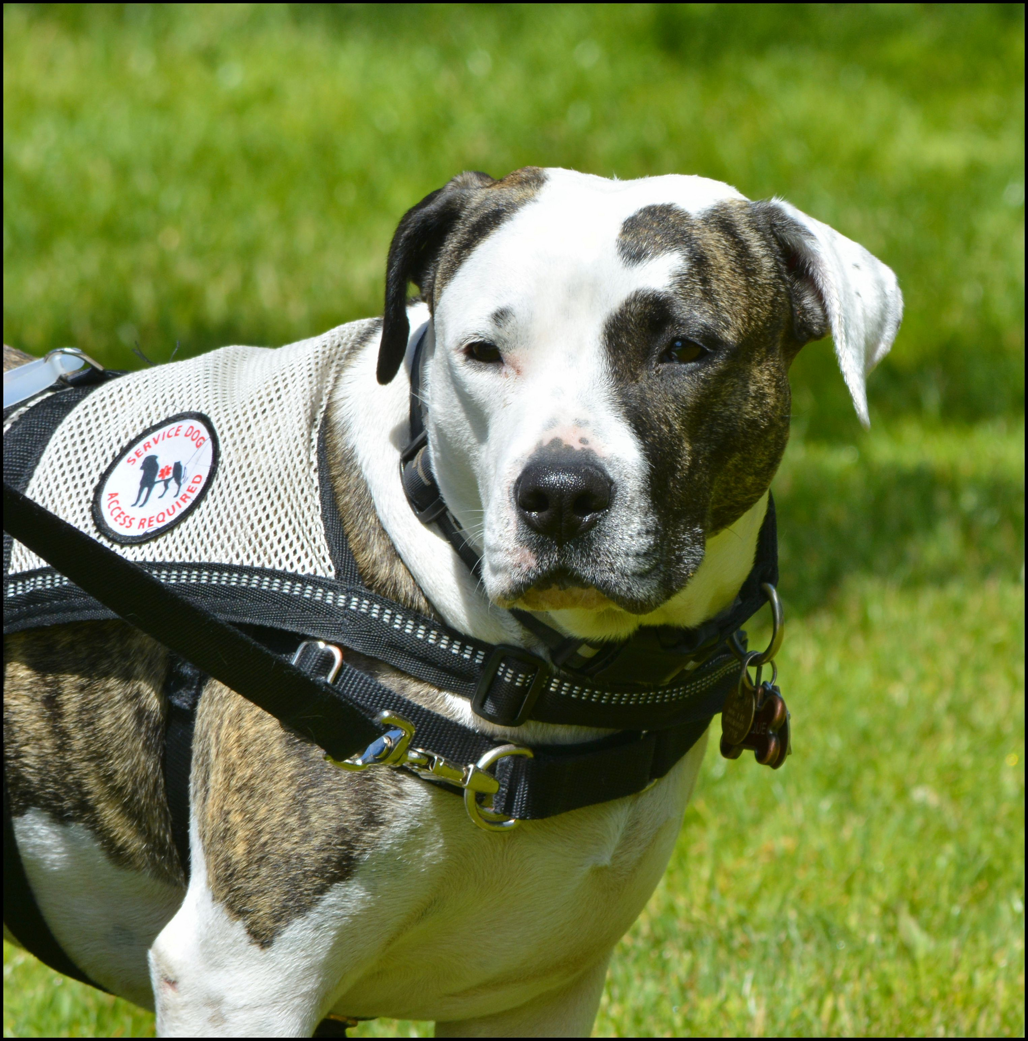 How To Get Your Dog Certified As A Service Dog F F 2018