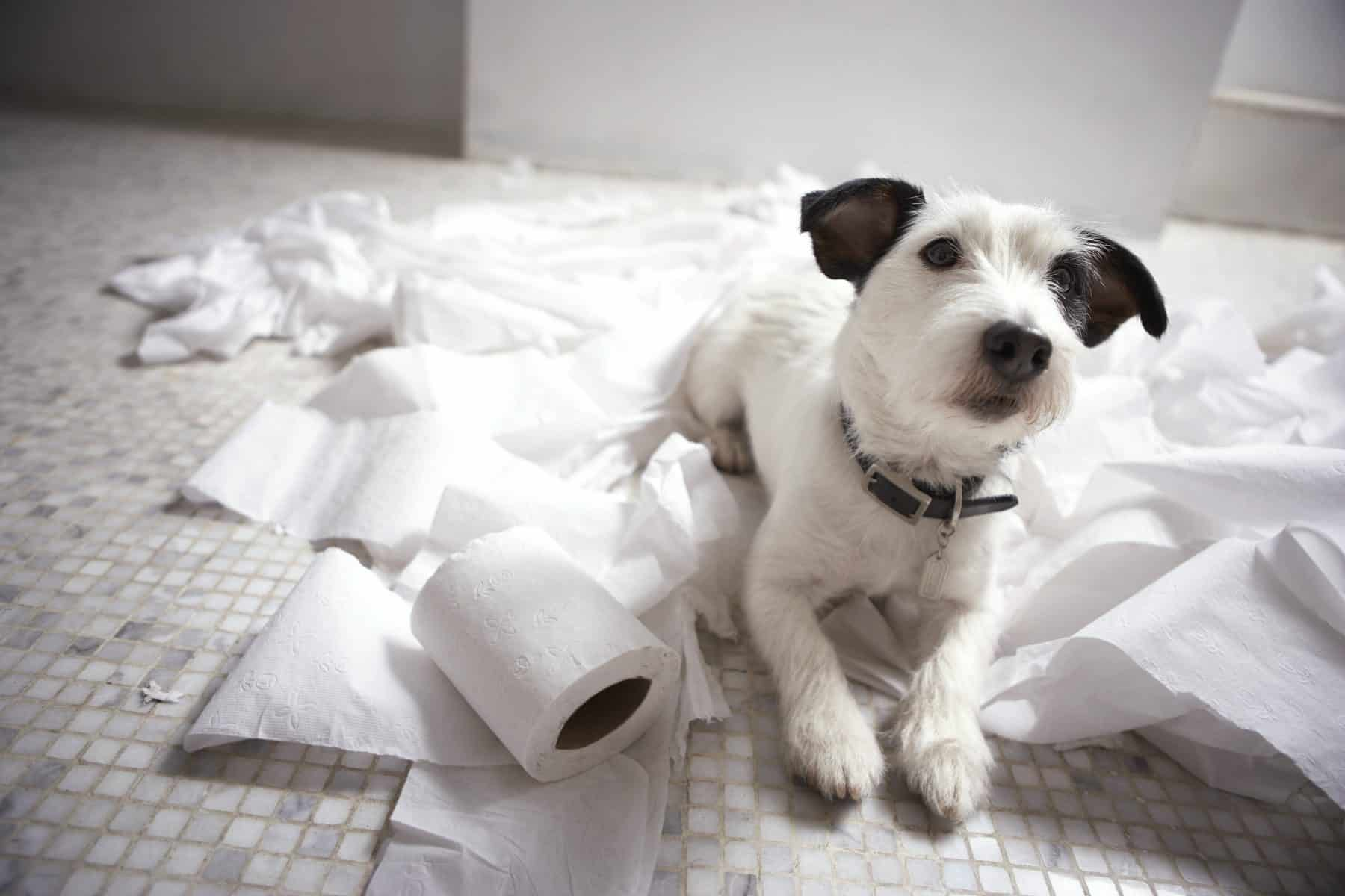 the 6 signs of separation anxiety in dogs | the dog people by rover