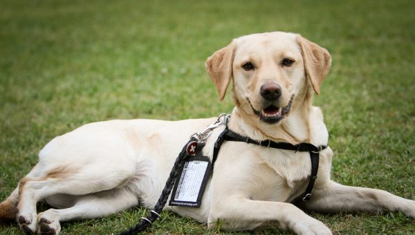 How Service Dogs Help Treat Depression Anxiety Rover Blog