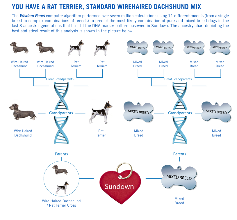 Best Company To Get Your Dog S Dna