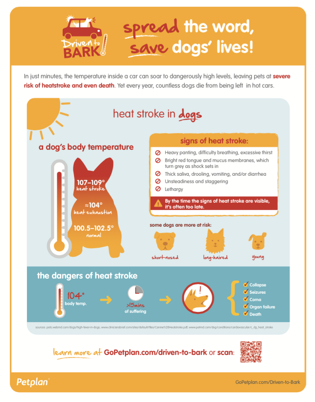 Courtesy of Petplan pet insurance.