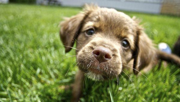 5 Top Dog Parks Near Murfreesboro