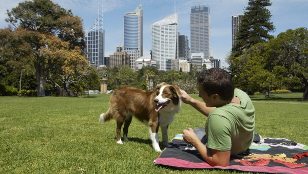 Most Dog-Friendly Cities: The Bark Score