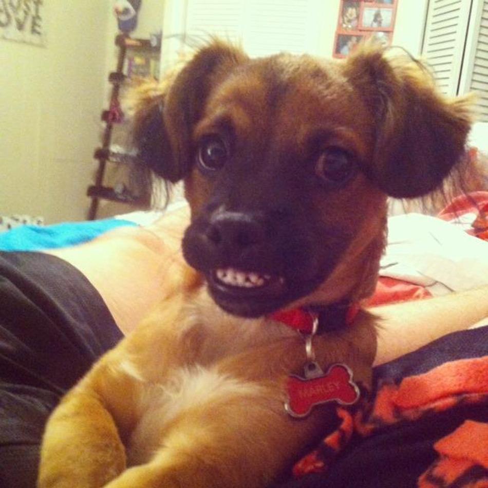 awkward smile dog