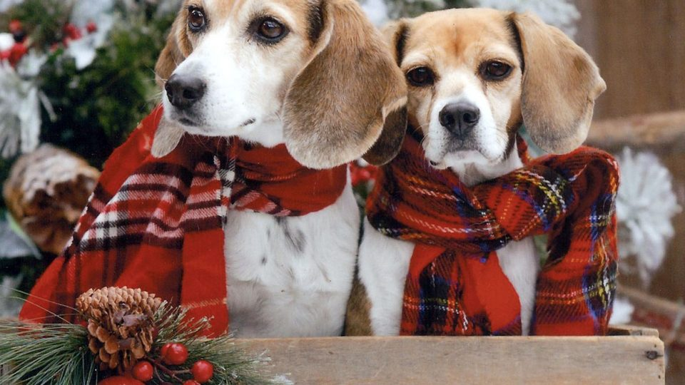 the 8 best gifts for beagle lovers the dog people by rover com