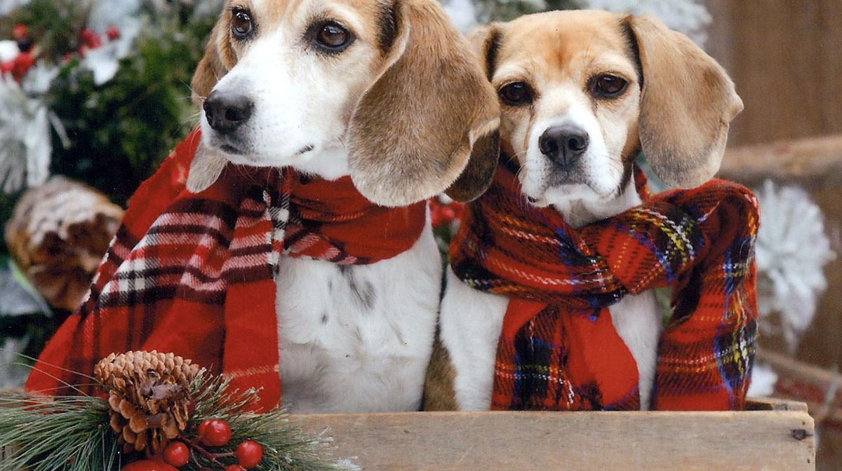 Beagle Gifts 16 Great Gifts For Beagle Lovers For 2018