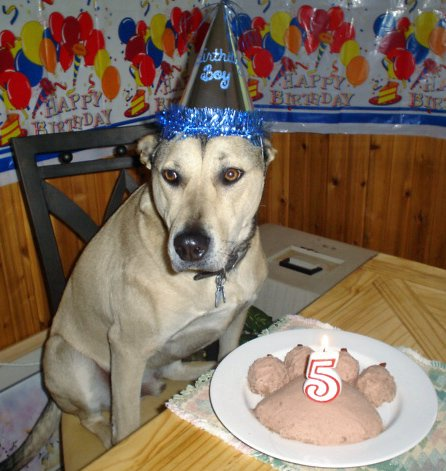 15 Dogs Having The Best Birthday Parties Ever