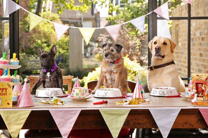 Favorito Idee per una fanstatica festa di compleanno canina! GP53