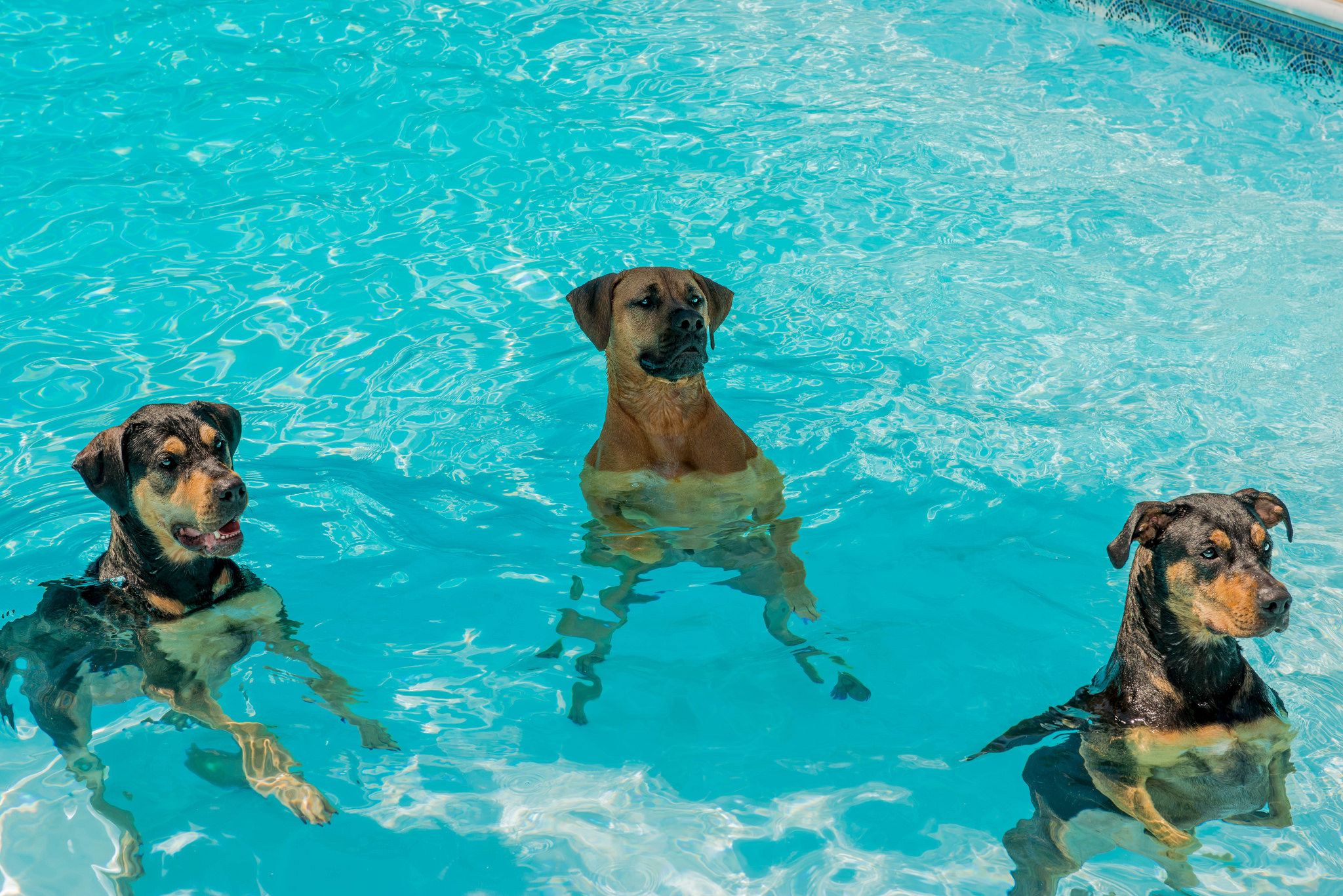 5 hot weather hazards for dogsand how to help the dog people by caring for your publicscrutiny Gallery