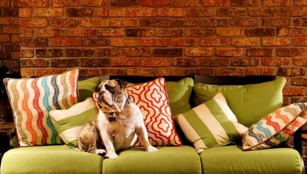 20 Must-Have Bulldog Gifts for English Bulldog Lovers