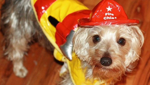 Rover.com's Guide to Pet Fire Safety