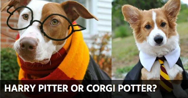 halloween costume dog quiz