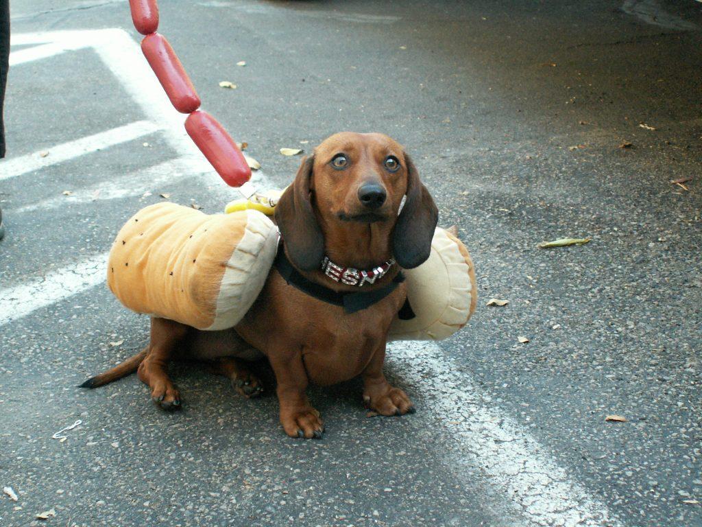http://www.backwoodsinn.com/img/hotdog1.JPG