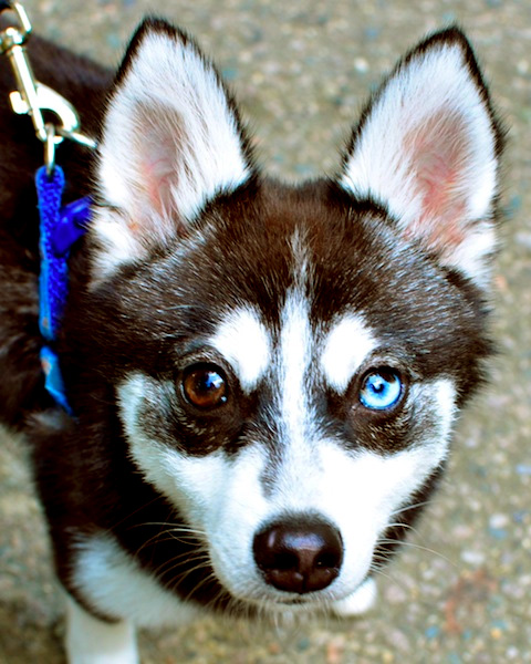 meeshu one blue eye