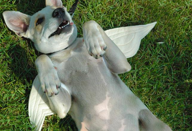 perfect angel behavior puppy