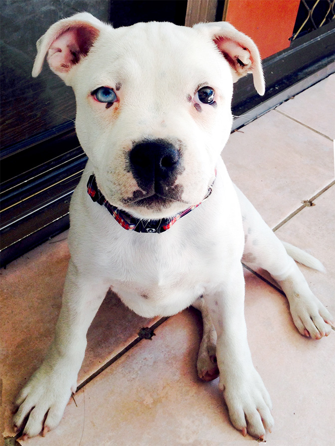 11 Gorgeous Dogs With Different Colored Eyes The Dog People By Rover Com