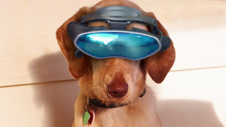 The Top 10 Dog Quizzes | The Dog People by Rover com