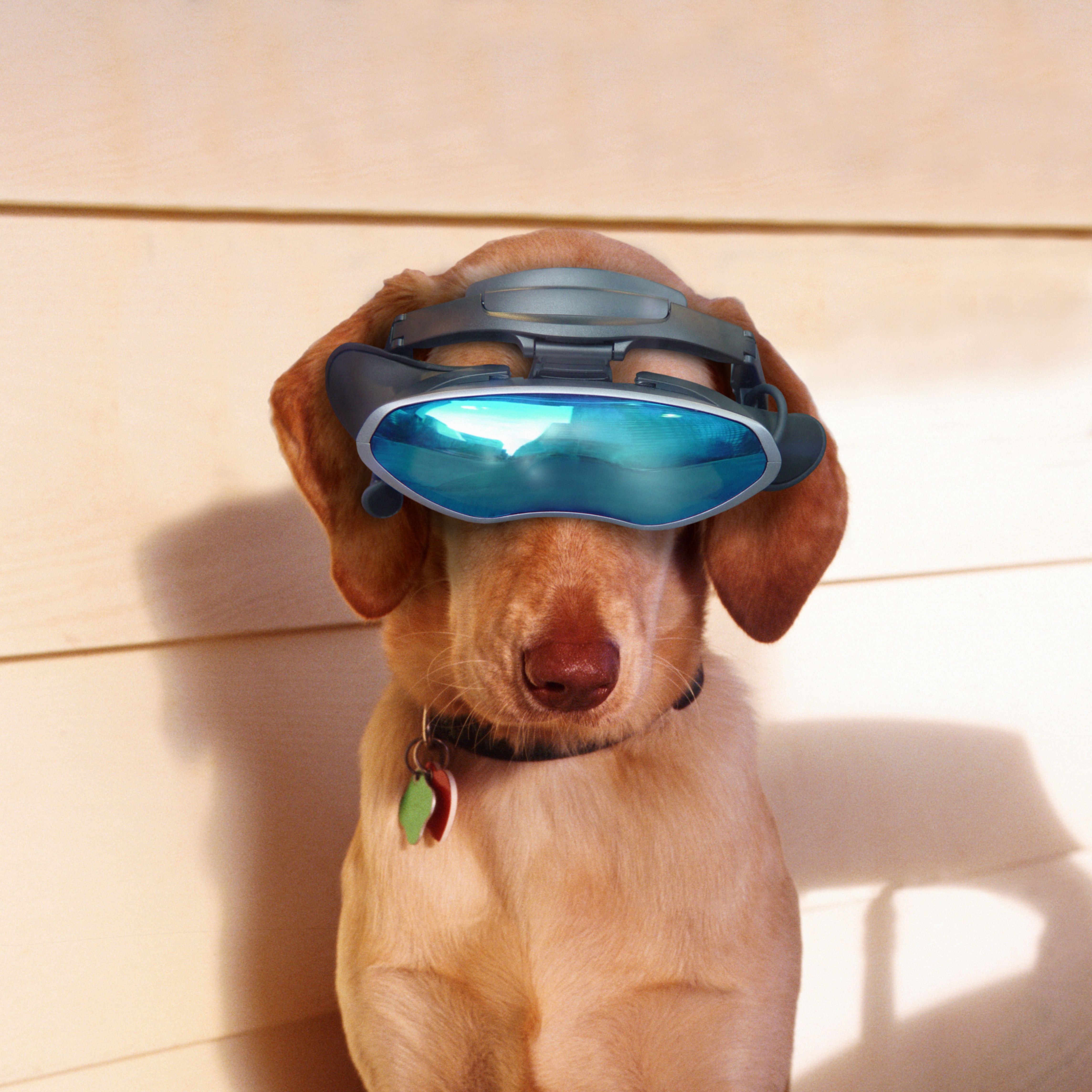 The Top 10 Dog Quizzes