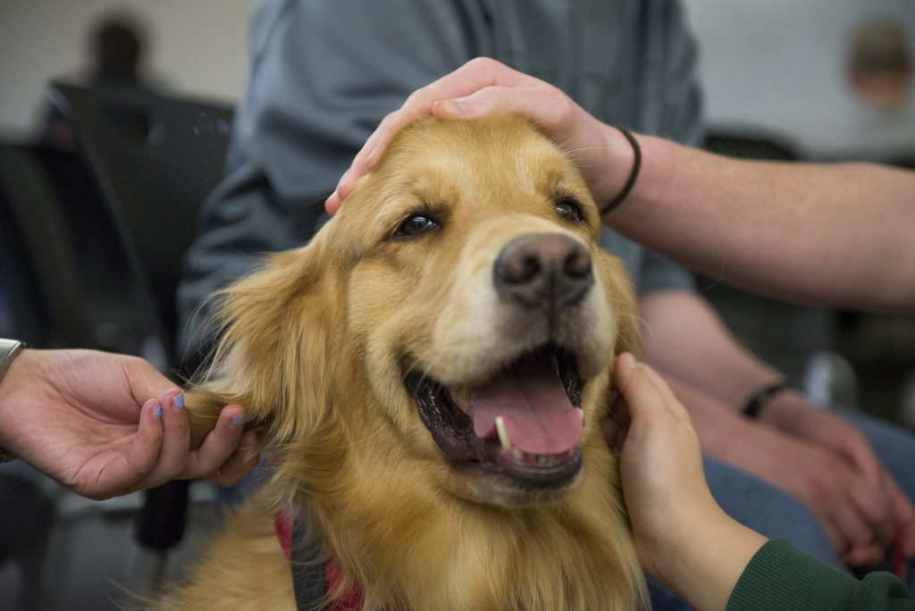 Getting Your Dog Certified As A Service Dog