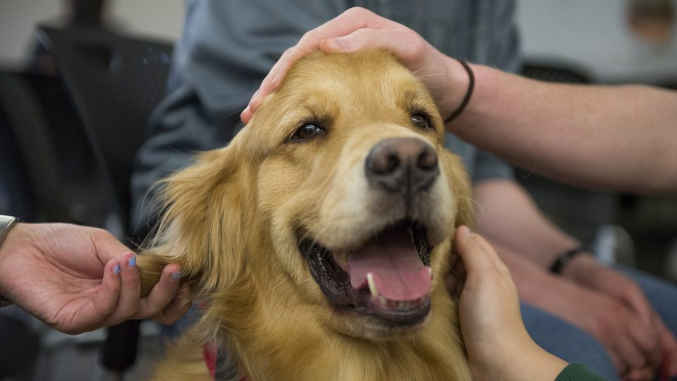 How Service Dogs Help Treat Depression & Anxiety | Rover Blog