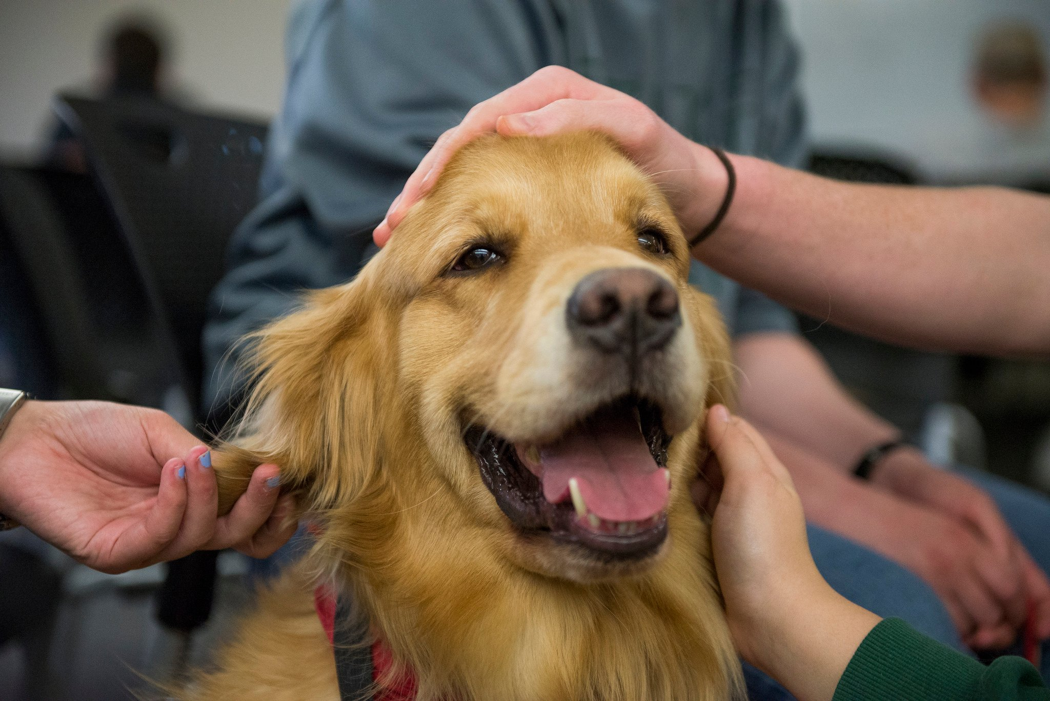 Pet Therapy and Depression